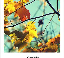 Maple Leaves by francelal