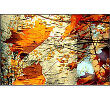 Maple leaves tree Photographic Print