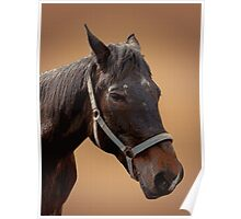 The head of a horse, two horses Poster