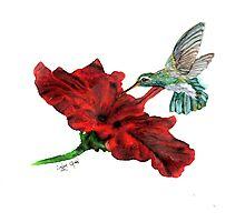 Hungry Hummingbird Photographic Print