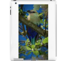 Blue Bellied Roller iPad Case/Skin