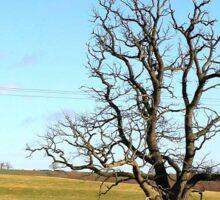 The lone tree Sticker
