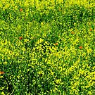 Yellow, Green and Red. by Maybrick