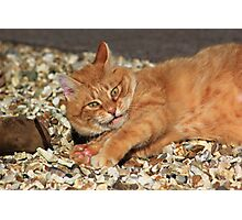 Ginger cat playing with toy mouse Photographic Print