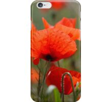 Flowers of common poppy in a field. iPhone Case/Skin