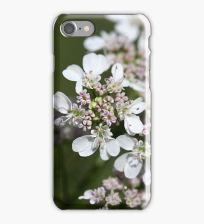 Macro photo of Coriander flowers (Coriandrum sativum). iPhone Case/Skin