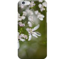 Macro photo of Coriander flowers (Coriandrum sativum). iPhone Case/Skin
