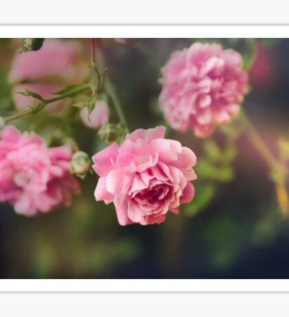 Pink Wild Drift Roses Sticker