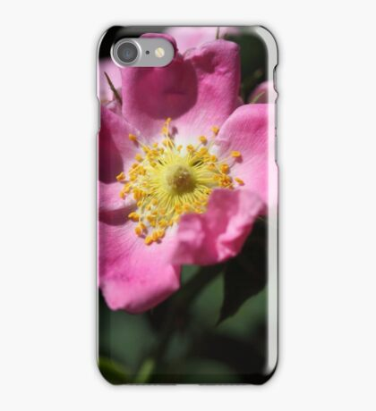 Flower of the wild rose Rosa jundzillii iPhone Case/Skin