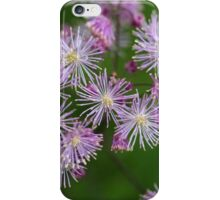 Columbine meadow-rue flowers (Thalictrum aquilegiifolium) iPhone Case/Skin
