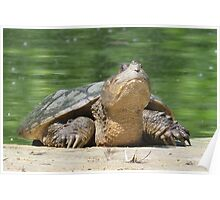 Giant Snapping Turtle Poster