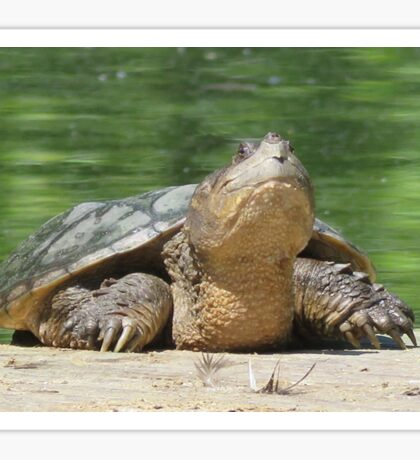 Giant Snapping Turtle Sticker