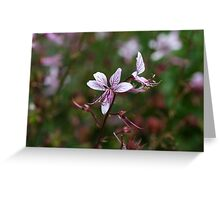 Flower of a burning bush (Dictamnus albus) Greeting Card