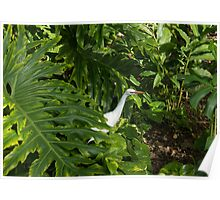 Hawaiian Garden Visitor - a Bright White Egret in the Lush Greenery Poster
