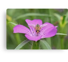 Hoverfly on Pink flower Canvas Print