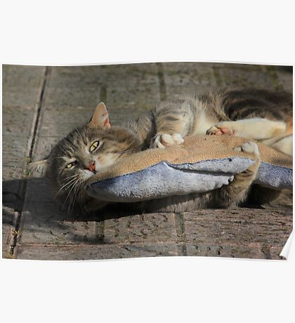 Grey cat playing with toy fish Poster