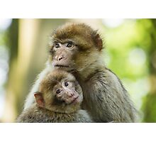Woburn Safari Park - Monkeys Photographic Print