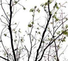 Branches Sticker