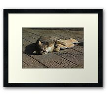 Grey cat sleeping with toy fish Framed Print