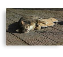 Grey cat sleeping with toy fish Canvas Print