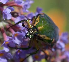 Green June Beetle by Otto Danby II