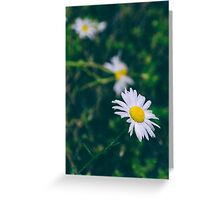 Daisy Threesome Greeting Card