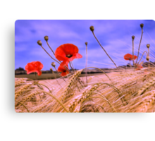 Barley with Poppies Canvas Print