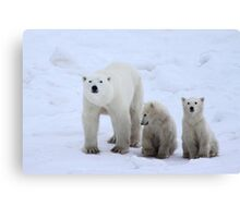 Polar Bears Family Portrait #3, Churchill, Canada Canvas Print