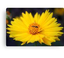Tiny Bee On Yellow Daisy Canvas Print