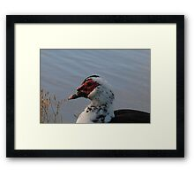 Bird-naturally sitting Framed Print