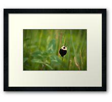 American Carrion Beetle Framed Print