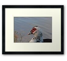 Bird-looking out into the sun Framed Print
