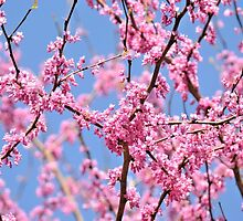 Spring Is Pink by ©Dawne M. Dunton