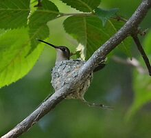 Mama Hummingbird by Kate Farkas