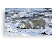 Polar Bear & Cub Tasting the Air, Churchill, Canada Canvas Print