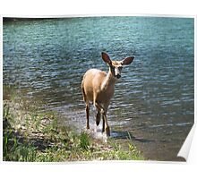 Deer by the Lake Poster