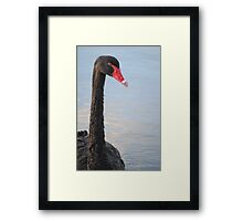 Black Swan 3 Framed Print