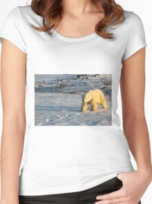 Polar Bear Walking in Footprints, Churchill, Canada Women's Fitted Scoop T-Shirt