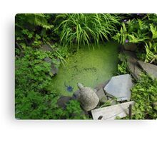 The Pond at 615 Green Canvas Print