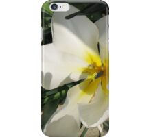 Sunlit Tulips iPhone Case/Skin