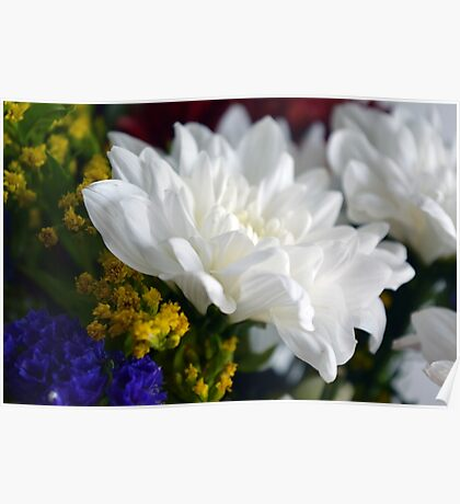 White flower macro, natural background. Poster