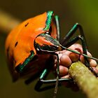 Stink bug 666 by kevin chippindall