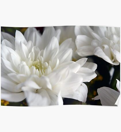 White flowers macro, natural background. Poster