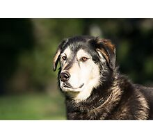 Dog Portrait Photographic Print
