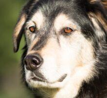 Dog Portrait Sticker