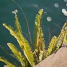 Bracken on the Harbour by Deborah McGrath