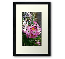 Summer Pink, bees bumbling Framed Print