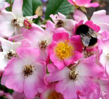 Summer Pink, bees bumbling Sticker
