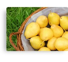 Pears in a basket Canvas Print