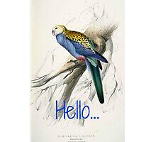 Vintage Parrot Print Photographic Print